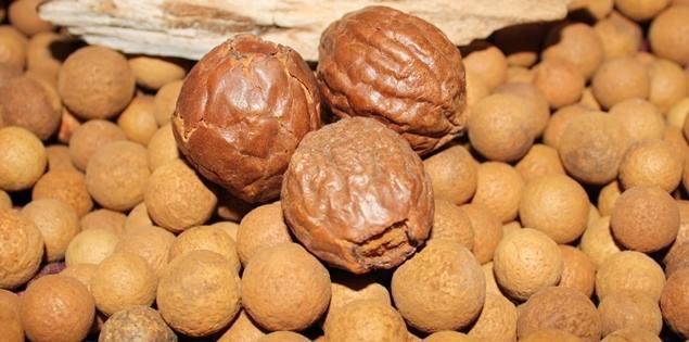 The Amazing Sandalwood Nut & Its Uses